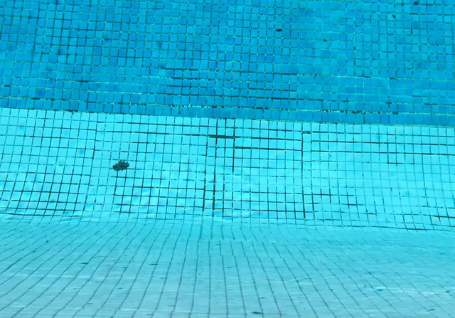 Une piscine mosaïque ? Pensez à vos joints !